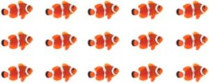 Clown Fish Group
