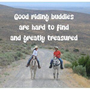 Horsey Sticker--Good Riding Buddies