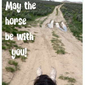 Horsey Magnet--May the horse be with you